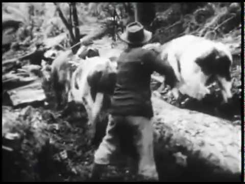 """Neltume """"No nos trancaran el paso"""" (1972)"""