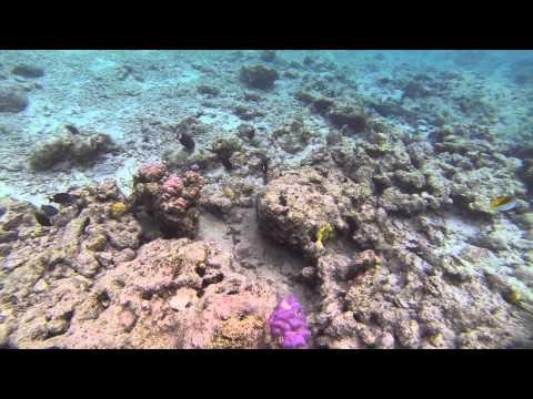 Vanuatu Round Island Tour - Snorkeling at Havannah