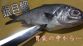 【片栗粉】深海に住み着いてるフナみたいな魚がうますぎた!