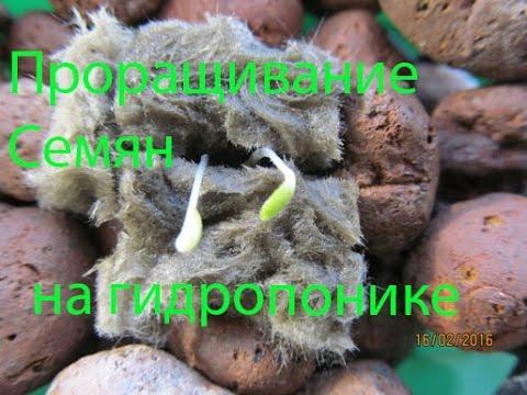 Как посадить семена для гидропоники