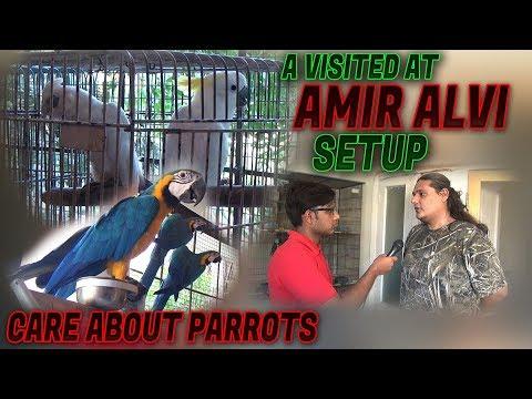 Visited Birds Parrots Setup Tips & care by Amir Alvi (Jamshed Asmi Informative Channel) Urdu/Hindi