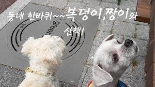 반려견산책, 동네한바퀴와 비타민D 듬뿍!!