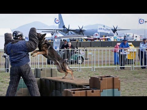 RAAF Military Working Dog displayed at Australian International Airshow 2015