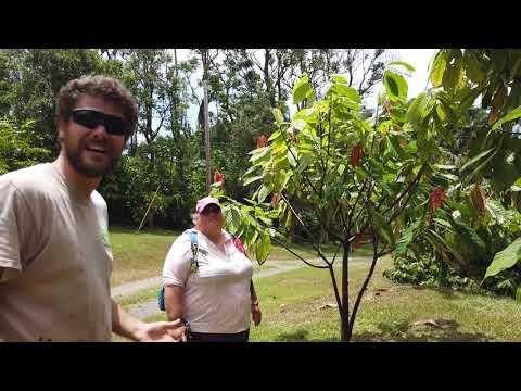 Hana Gold Chocolate Plantation Maui Tour! Branch To Bar In Maui