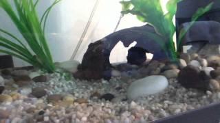 tropical fish tank peaceful update jewel 54l