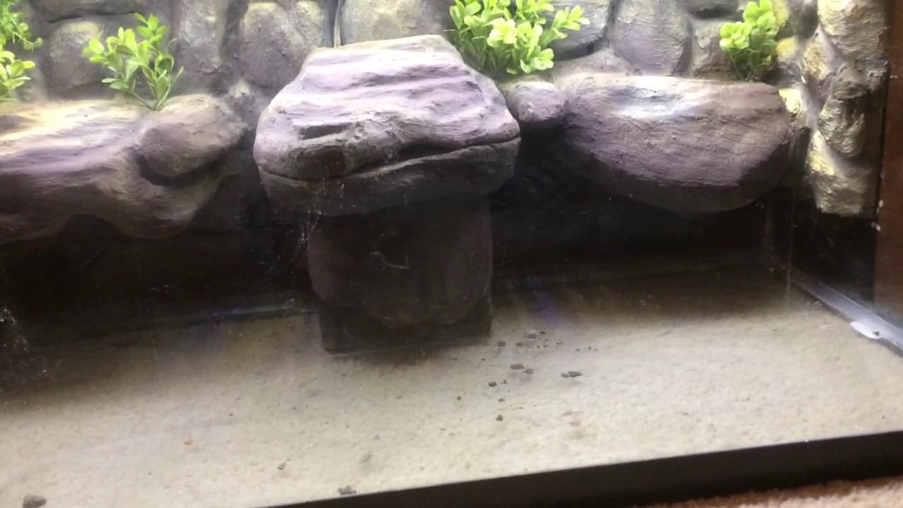 Half Land Water Aquarium