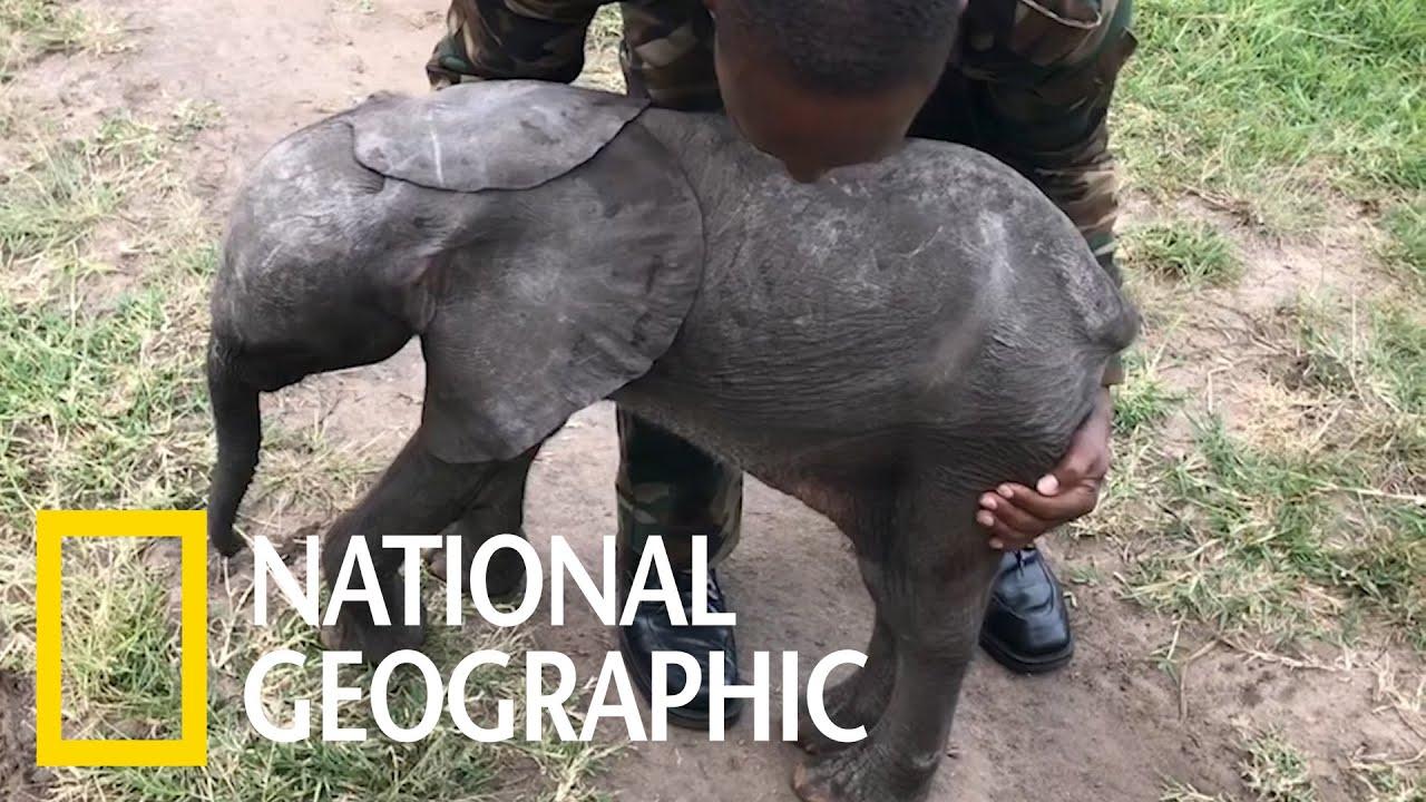 看早產小象搭乘直升機!《國家地理》雜誌
