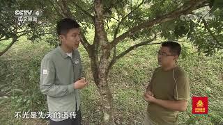 [远方的家]行走青山绿水间 走进蝴蝶的故乡| CCTV中文国际