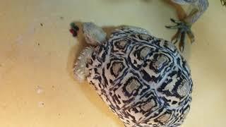 이구 거북