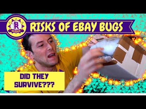 RISKY Ebay PURCHASE! - Stick Insects!