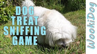 Dog Sniffing Treat Hunt Game  Wookidog 4k Malshi Dog Video