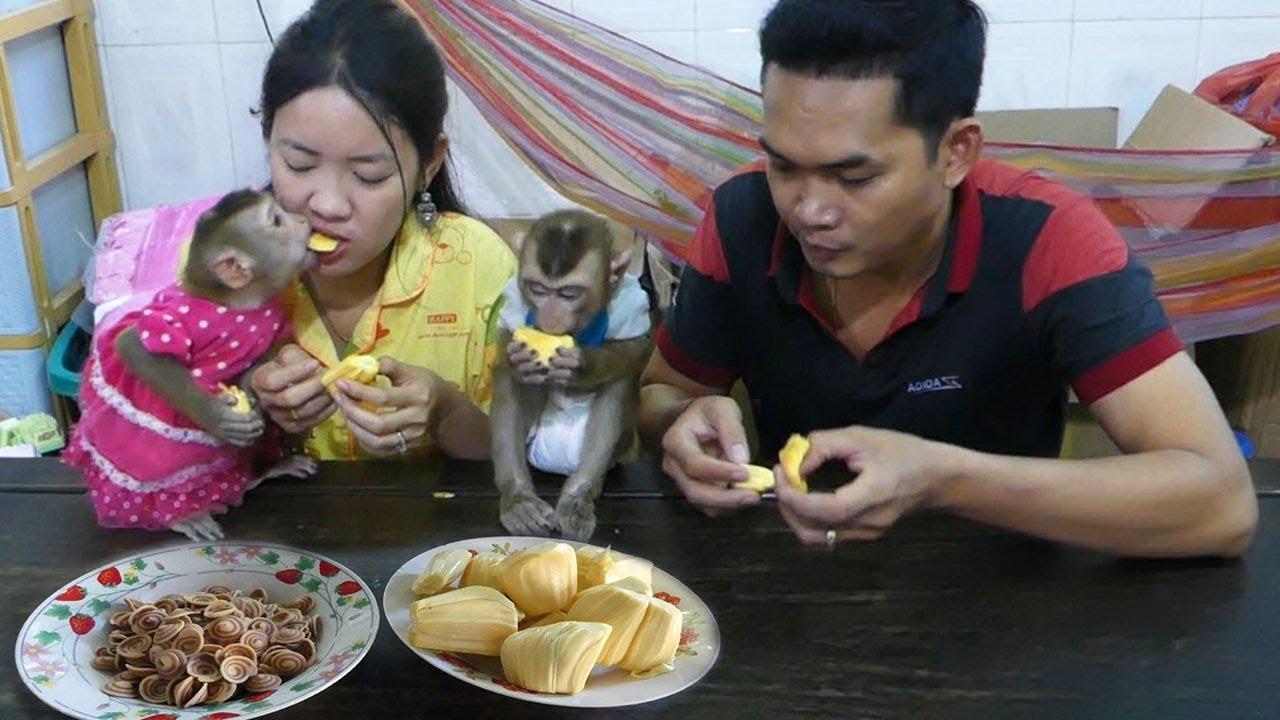Monkey Baby, Dodo Mori Family Join Yummy Breakfast Together