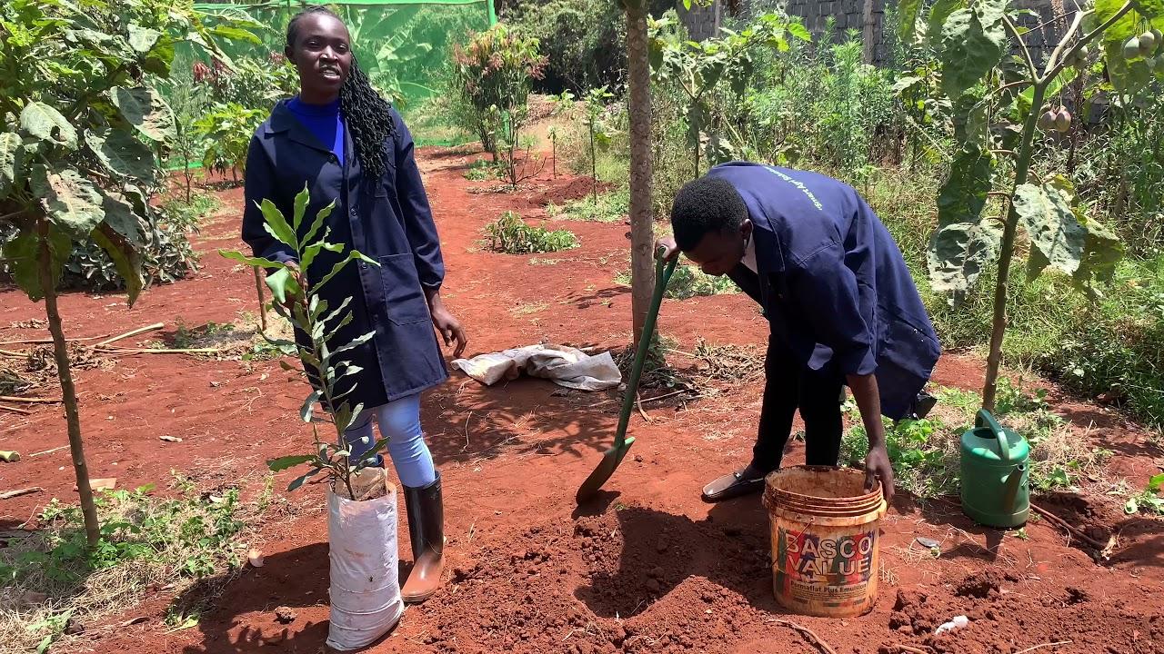 Download Planting of macadamia seedlings - OxfarmAg