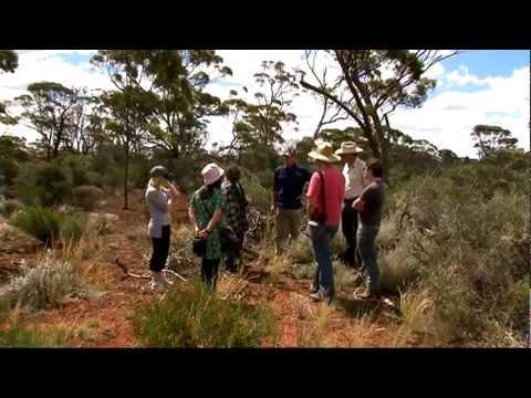 Lush Buying presents: Australian Sandalwood Buying Trip