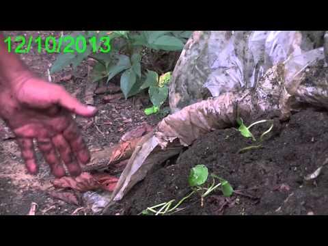 WETAKOLU Organic Farming Balangoda, Sri Lanka