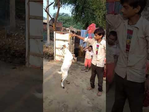 Chand Badri Se Parda Hata Diya Jaye Par Noorani Chehra Dikhai diya jaye