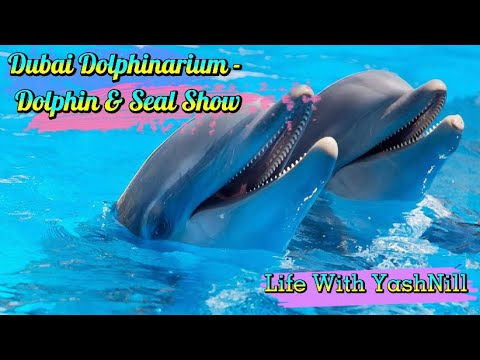 Dubai Dolphinarium – Dolphin & Seal Show | Amazing Live Performance Of Dolphins & Seal | Family Time