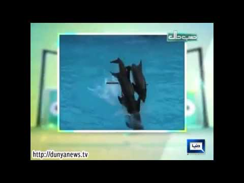 Dunya News - HASB-E-HAAL – 20-Nov-2014 Funny Videos & Pictures. Part 2/5