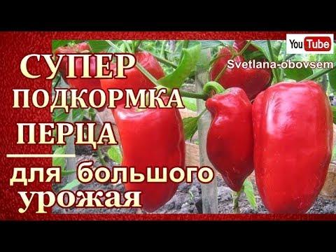 СУПЕР ПОДКОРМКИ ПЕРЦА