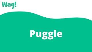 Puggle   Wag!