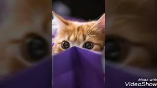 Милые фото собак и кошек)😍😍😍😘