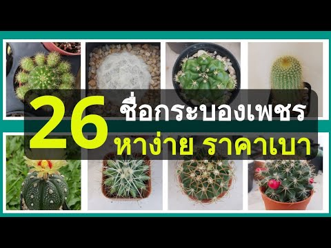 Cacti Identifications | Names of Cacti (26+) รวม 26 ชื่อกระบองเพชรสำหรับมือใหม่ [หาง่าย ราคาประหยัด]