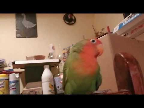 Parrot School bloopers