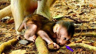 OMG, Very Hungry, Mom Can't Stop Her Baby Faura, Let Her Eat & Play thumbnail
