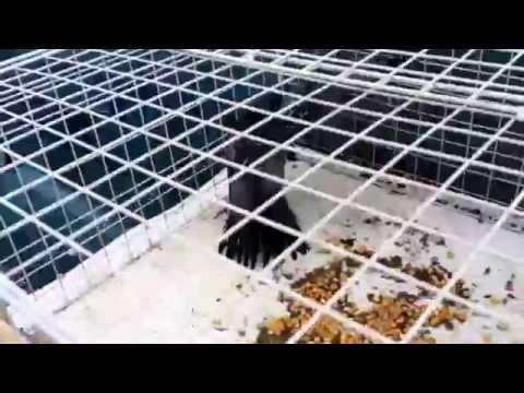 ハト鳩駆除の瞬間、大阪、株式会社環境クリエイトhato-poppo.com/contact.htm