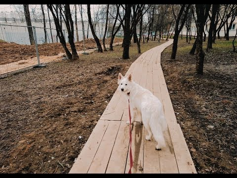 Гуляем с Линдой по пустой Москве. Что делает собака на самоизоляции? Нервная атмосфера...
