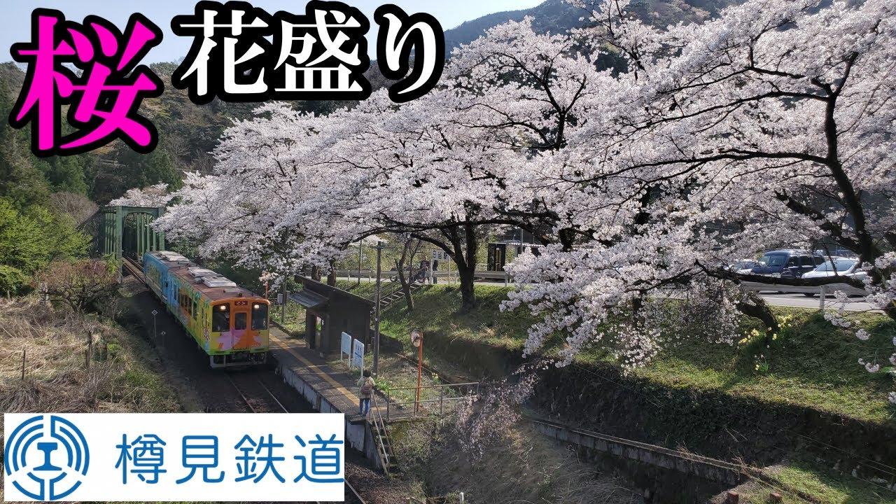 【廃線の危機?】春が最も美しい赤字ローカル線 樽見鉄道をご紹介