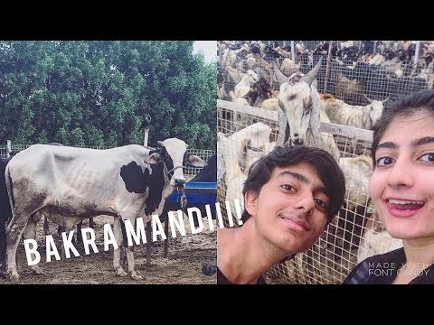 A GIRLS GUIDE TO BAKRA MANDI! | Anushae Says