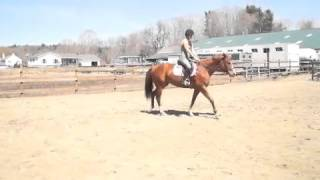 Macy Quarter Horse for sale
