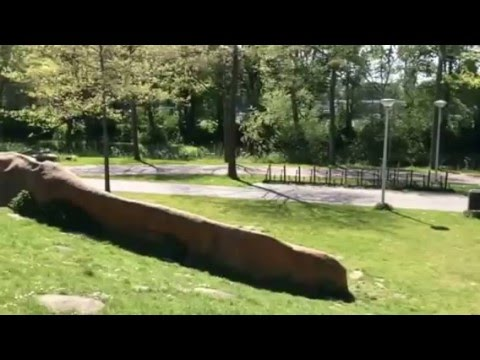 Amsterdam Odyssey: Discover the city in 360 #3: Meerpark playground