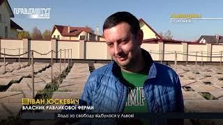 Равликова ферма. ПравдаТУТ Львів