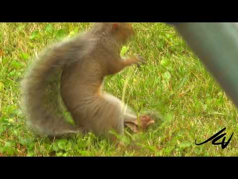 The Happiest Squirrel  - Your Happy Sunday Video