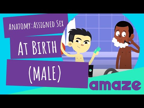 Biological Male Anatomy