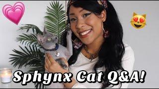 Sphynx Cat Q&A!