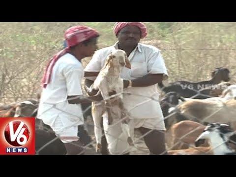 Telangana Government Speedup Sheep Distribution Scheme Process | V6 News