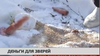 Деньги для зверей. Новости 24/01/2017. GuberniaTV