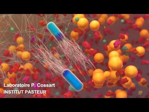 Listeria monocytogenes, un modèle exceptionnel en biologie des infections