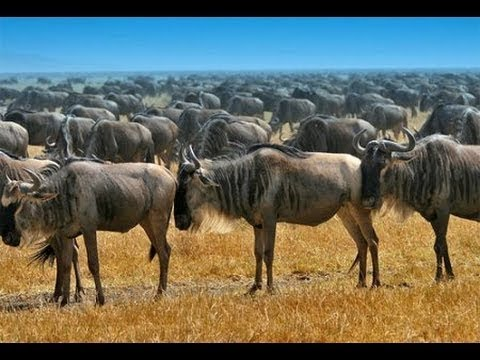 Очень интересный документальный фильм - Дикая Пустыня Африки. Животный мир Африки. - Видео онлайн