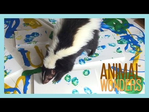 Lollipop The Skunk Paints!