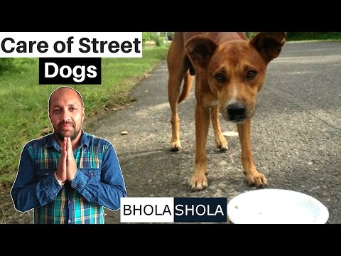 A Request - Please do care of street/stray dogs - Bhola Shola
