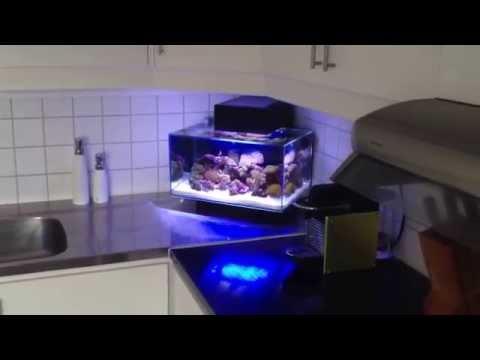 fluval edge reef led-setup