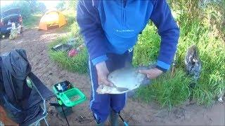 Рыбалка на р.Луга . д.Куровицы. Ловим лещей на ФИДЕР.