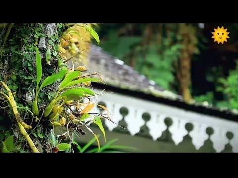 La Reunion Le Renouveau Du Jardin Creole Youtube