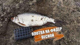 Ловля плотвы на фидер весной Рыбалка на реке СЕВЕРСКИЙ ДОНЕЦ