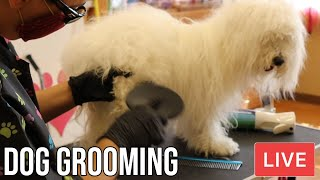 Dog Grooming Live Is Back!