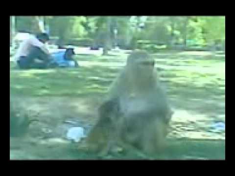 Download New video honey singh